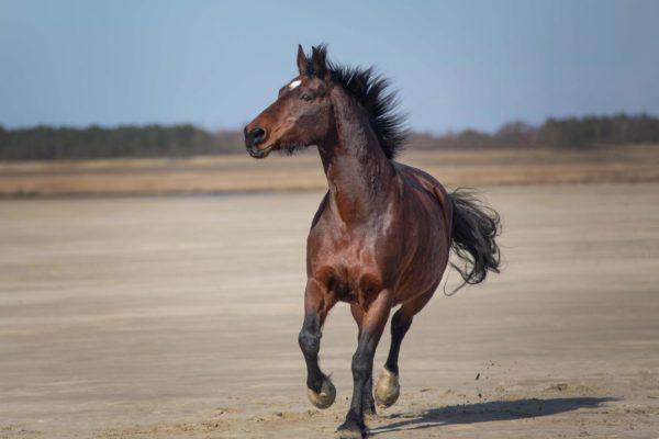 Strandshooting Pferde