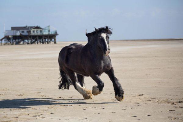 Pferde am Strand