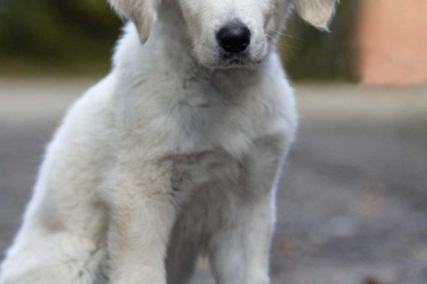 Ann-Christin Mundsahl Fotografie Hund